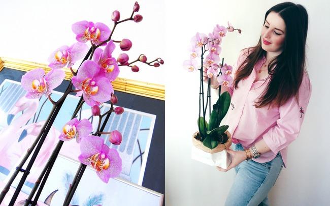 INTERIEUR: Roze orchidee van Het Beste van de Kweker