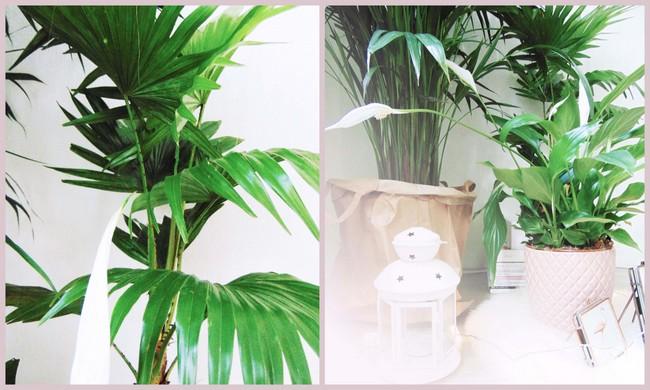 Planten in mijn interieur