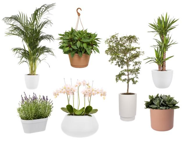 Kamerplanten en bloemen in een klein appartement